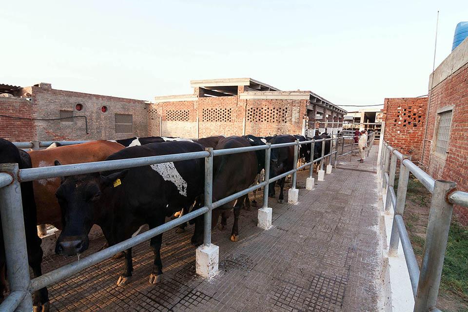 Quetta Dairy